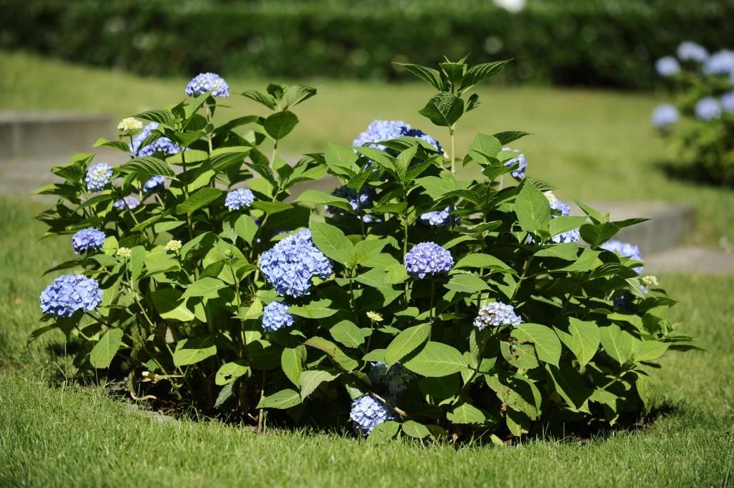 Potsdamer Gärten gartengestaltung potsdam turbotech co