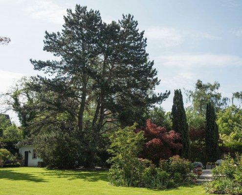 Baumgutachten und Baumkontrolle