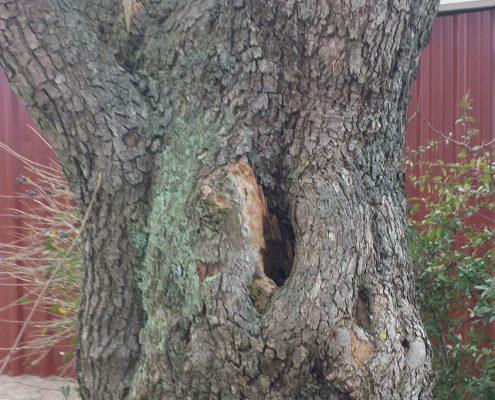 Baumkontrolle Baumprüfung