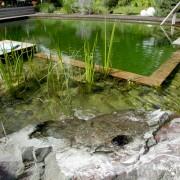 Gestaltung eines Schwimmteiches