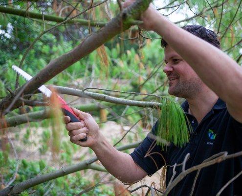 Jahresgartenpflege Baumschnitt