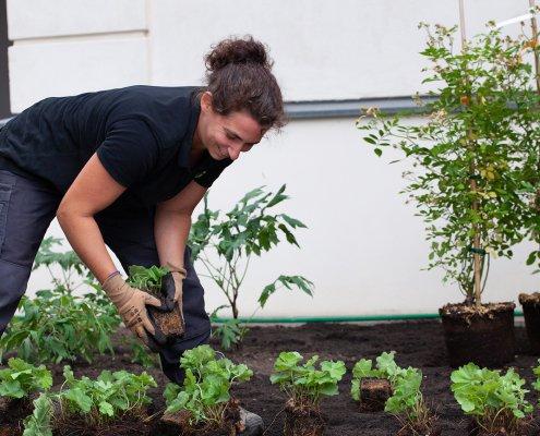 Pflanzplanung in der Gartengestaltung