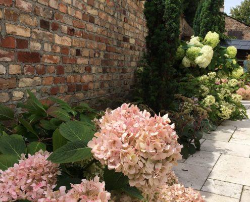 Pflanzplanung Hortensien Garten