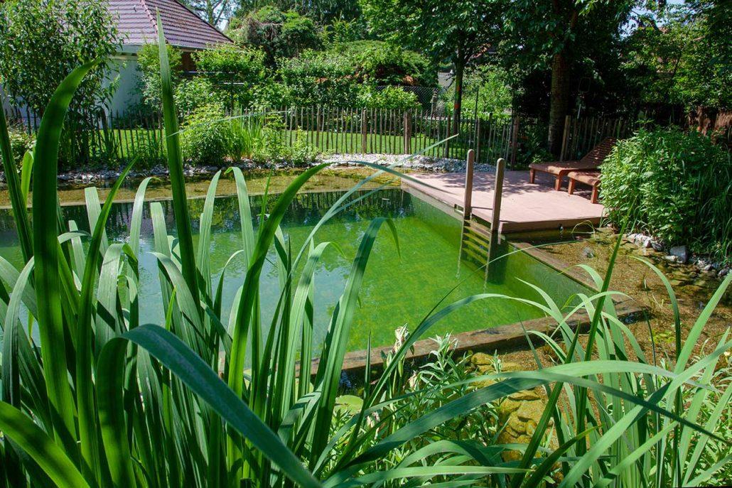Schwimmteiche potsdamer g rten g rten f r berlin und for Naturteich schwimmteich