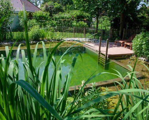 Schwimmteich Naturteich Potsdam