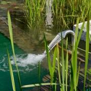 Herbstspflege für den Teich